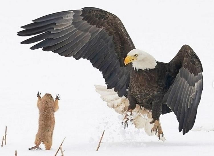Savršene i presmešne – ovo su najsmešnije fotografije divljih životinja za ovu godinu