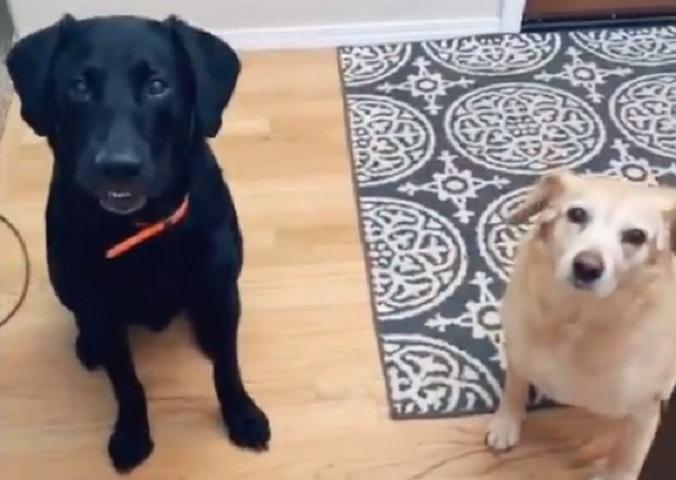 Vlasnica otkrila psima svoje ime – njihova reakcija nasmejala Tviteraše