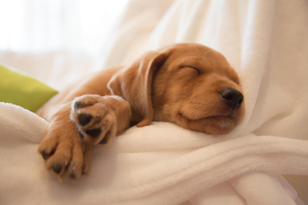Kako životinje spavaju i zašto baš tako?