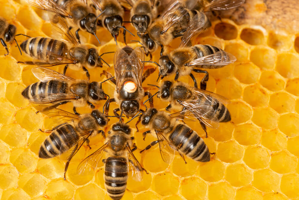 Ovo je grad pčela u Evropi, ima preko 6000 košnica!
