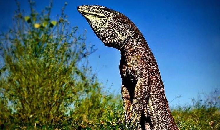 Komodo ostrva i zmajevi – upoznajte jedno interesantno ostrvo Indonezije