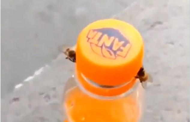 Dve pčele zajedno otvorile fašu soka