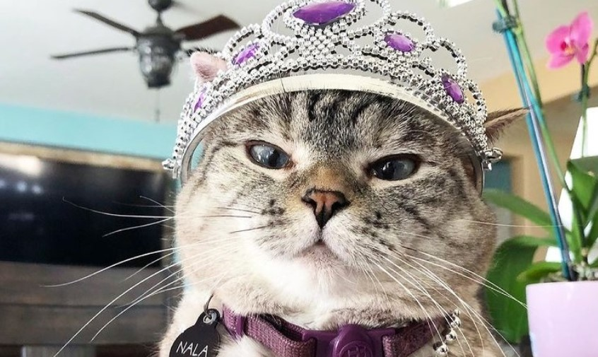 Ovo je Nala i ona je zvanično najpopularnija mačka na svetu