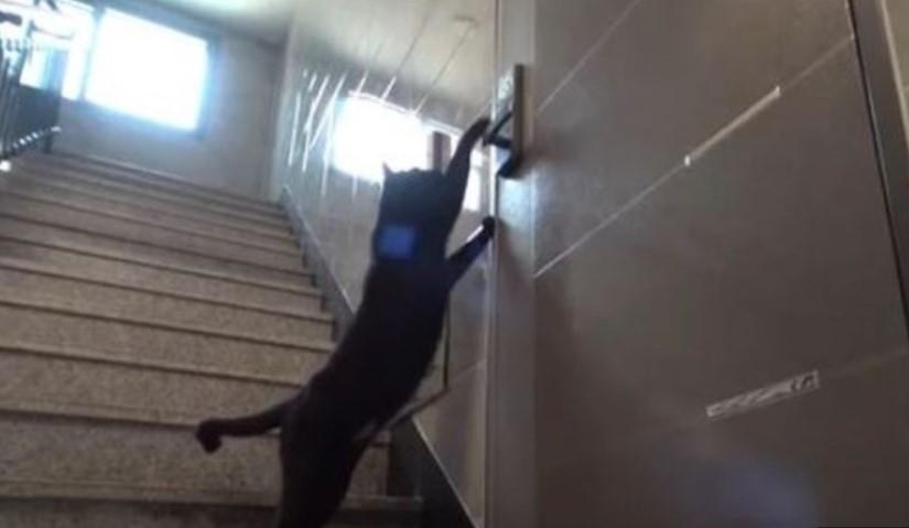 Mačka genije – ulazi u stanove jer zna šifru za otvaranje vrata