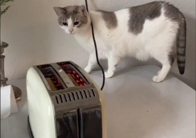 Mačka, prvi susret sa tosterom i rekacija koja će vas nasmejati do suza