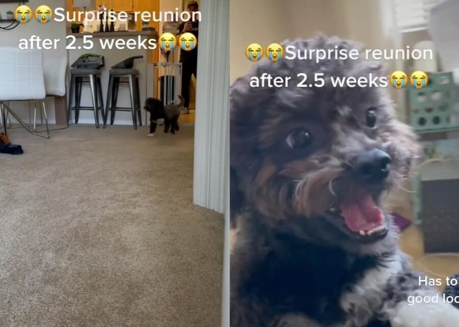 Čista ljubav i sreća – Pas ugledao vlasnicu nakon dve nedelje razdvojenosti