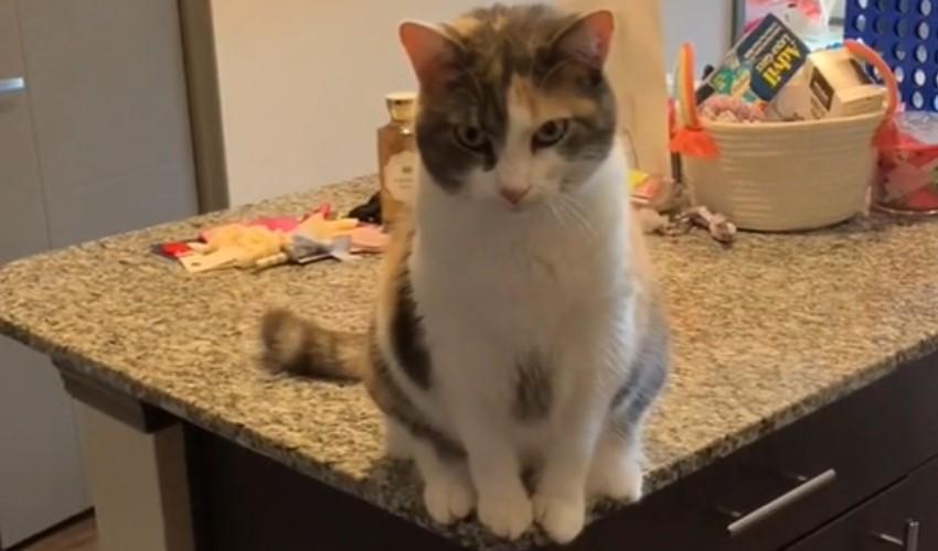 Mačka se naljutila, pa je svojoj vlasnici spremila presmešnu osvetu