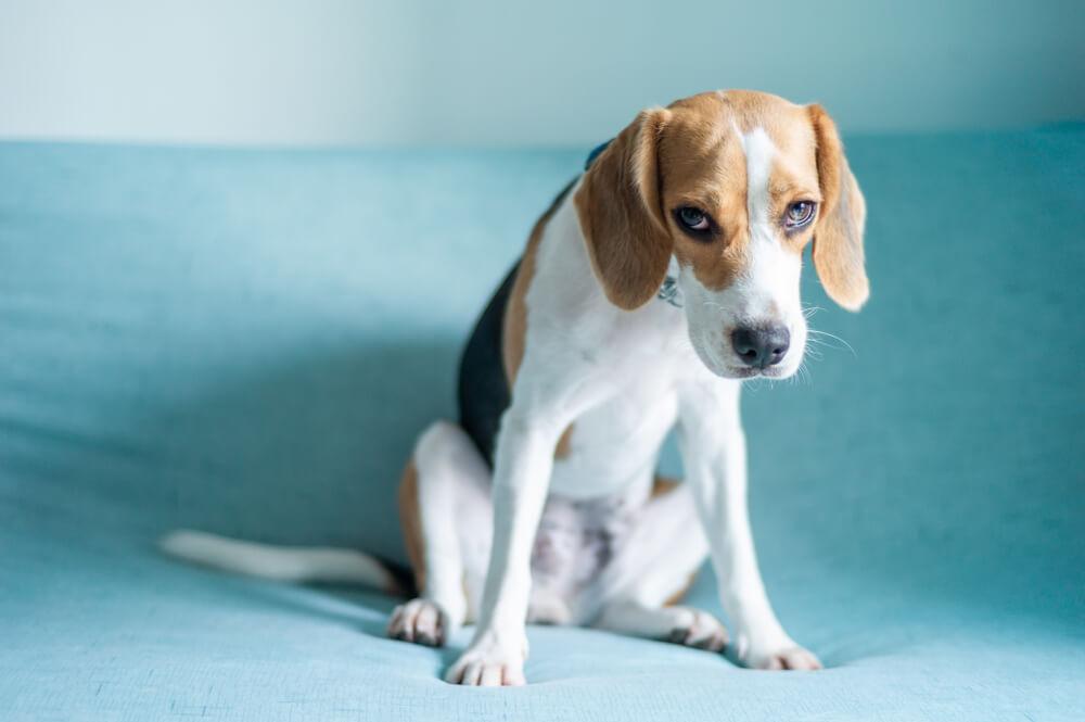 Ovo su situacije koje umeju da prouzrokuju stres kod pasa