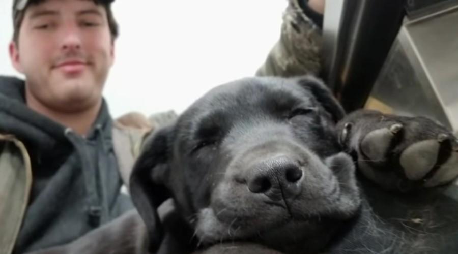 Za ljubav nisu potrebne reči – gluvi momak je usvojio gluvog psa i rodila se jako dirljiva ljubav