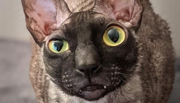 Mačak Piksel nikoga ne ostavlja ravnodušnim – Jednima je presmešan, drugima odbojan