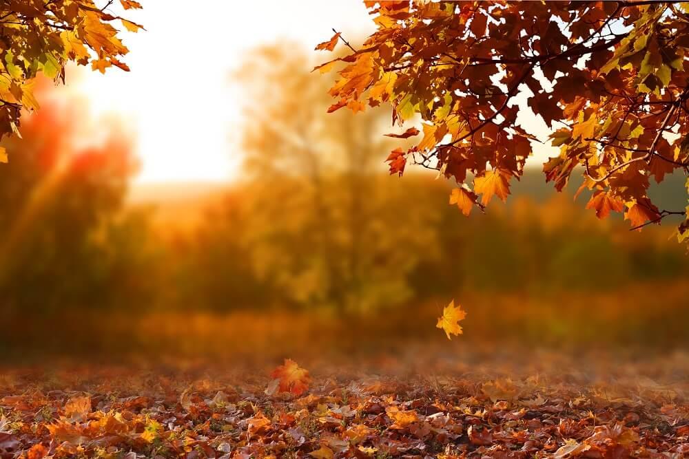 10 zanimljivosti o jeseni koje možda niste znali
