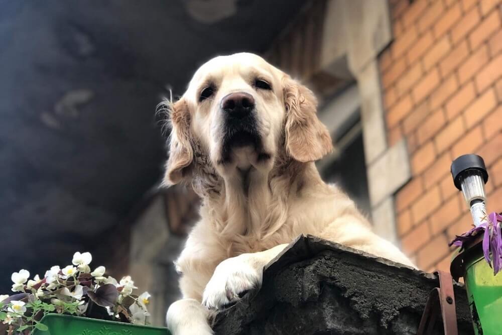Ovaj pas sa balkona je popularniji kod turista od Kipa slobode – evo i kako