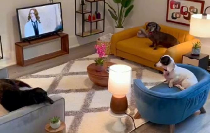 Zašto da ne – Čovek dizajnirao minijaturnu sobu za svoja tri psa