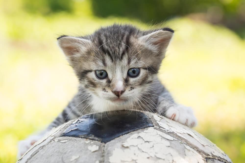 Sve oči bile su uprte u nju – Evo kako je jedna maca ukrala svu pažnju publike na stadionu