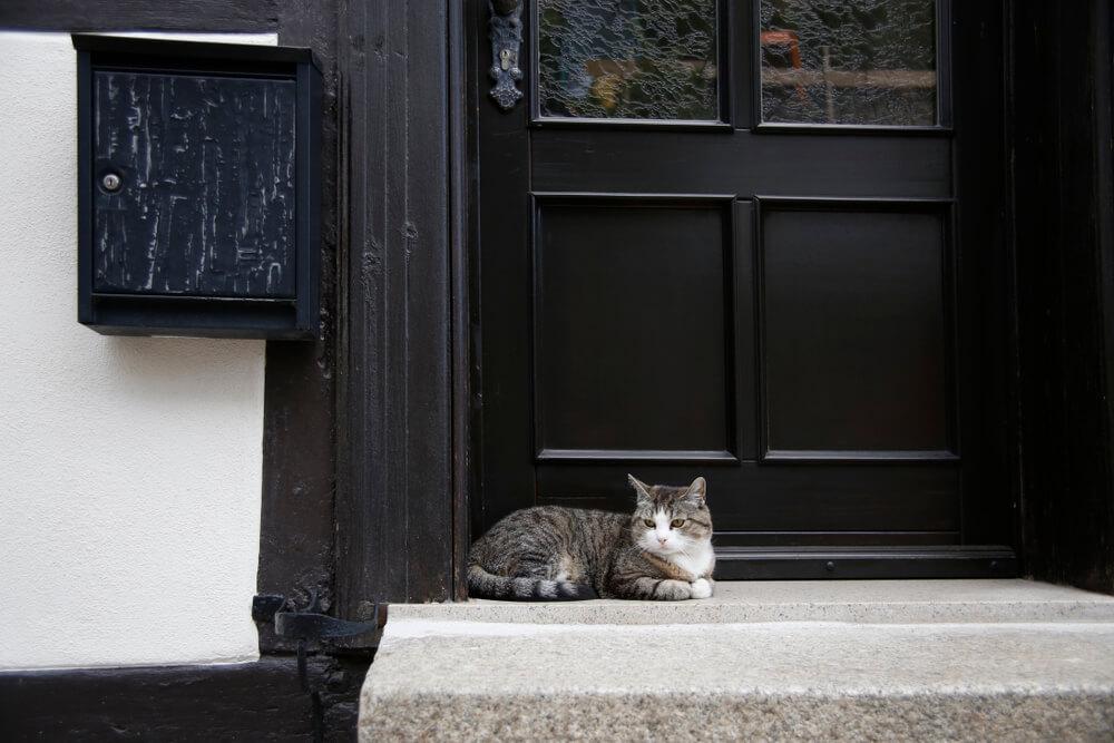 Šta po narodnom verovanju znači kada vam se pojavi mačka pred vratima i ne želi da ode?