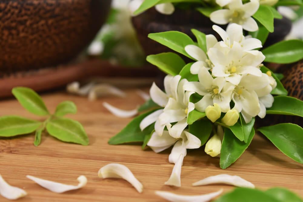 Čaj od jasmina ima jako lekovita svojstva za vaš mozak i telo, evo i koja