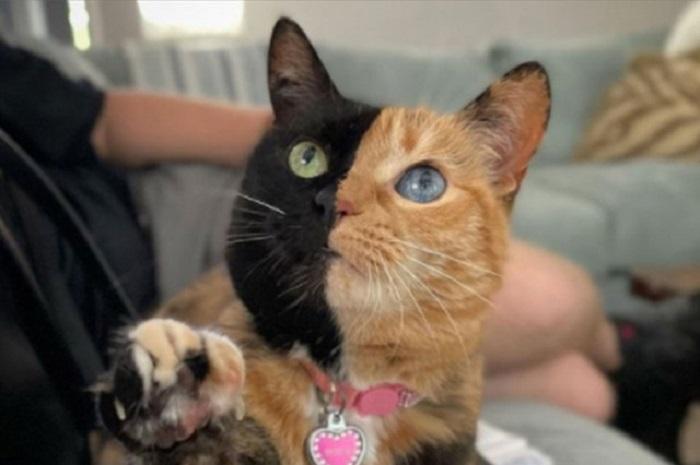 Totalno drukčija od drugih – Mačka sa dva lica najpopularnija na društvenim mrežama